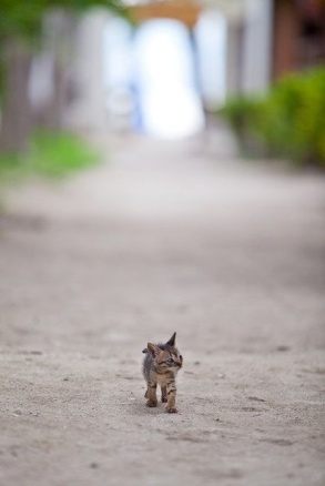 little kitten, big world